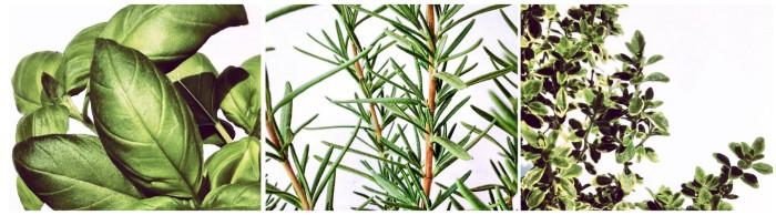 Basil • Rosemary • Thyme