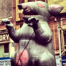 A vicious Inflatable Rat! Only seen on the streets of New York.