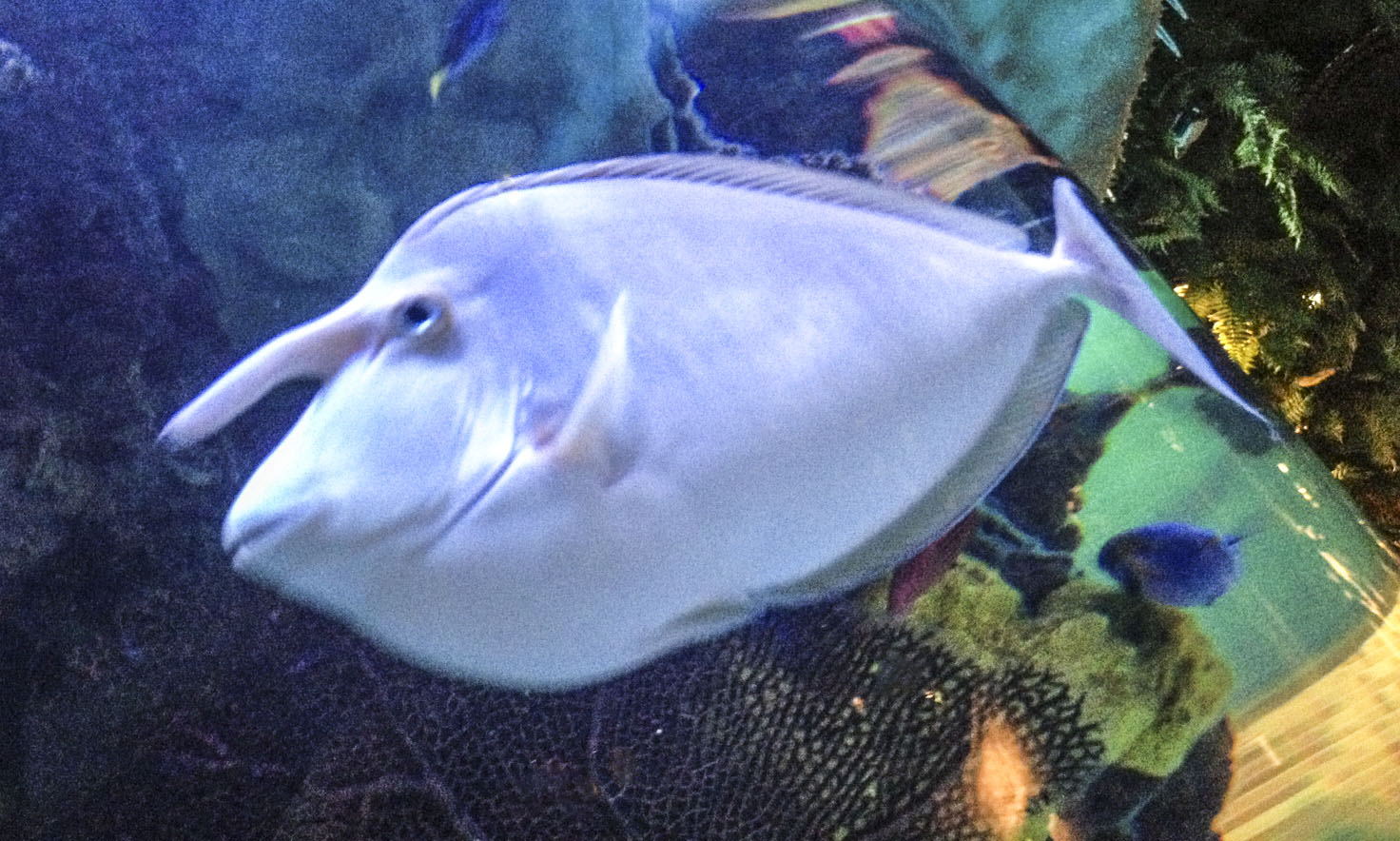 Deep Sea Creatures Found After Tsunami