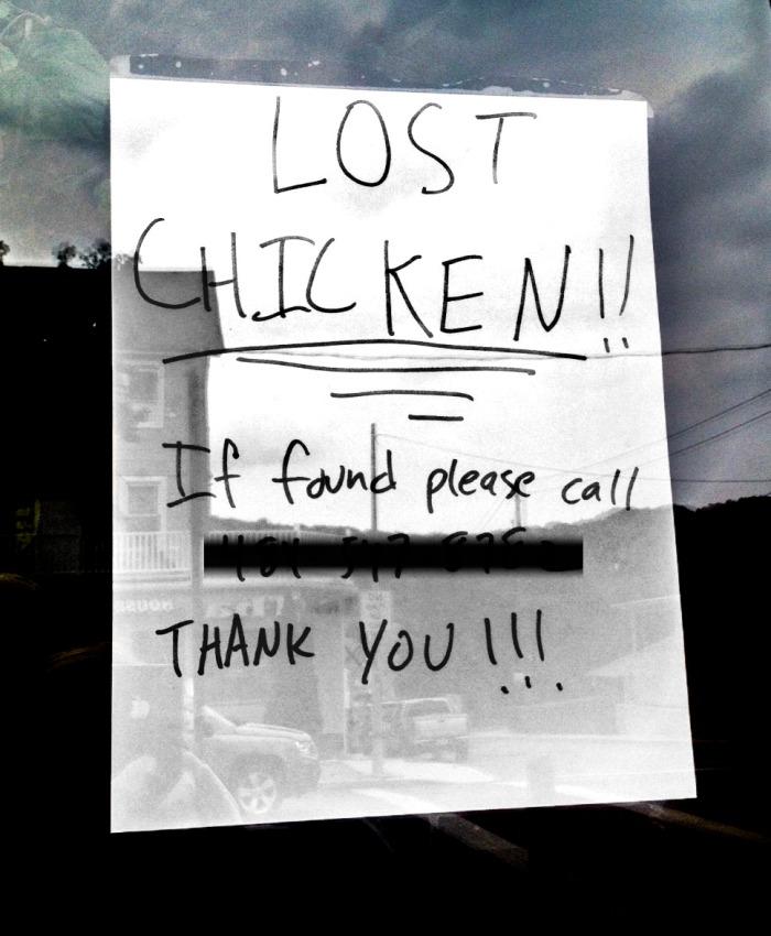 lostchicken