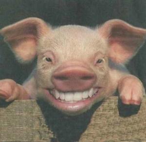 SmilingPig1