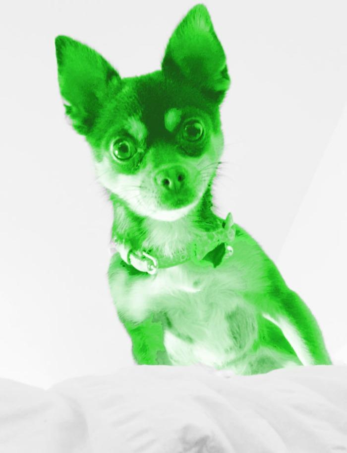 GreenPepperpic